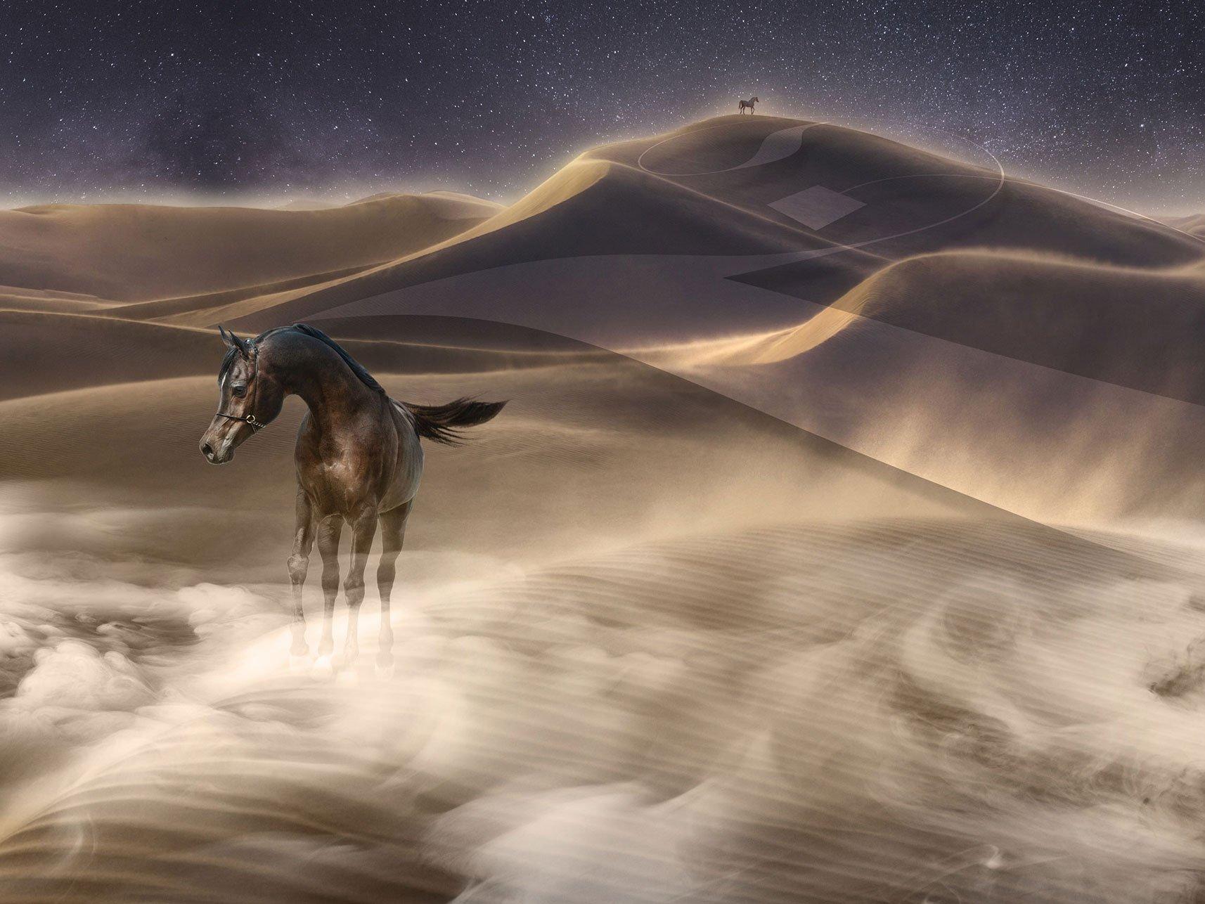 Al Jood Horse Stud